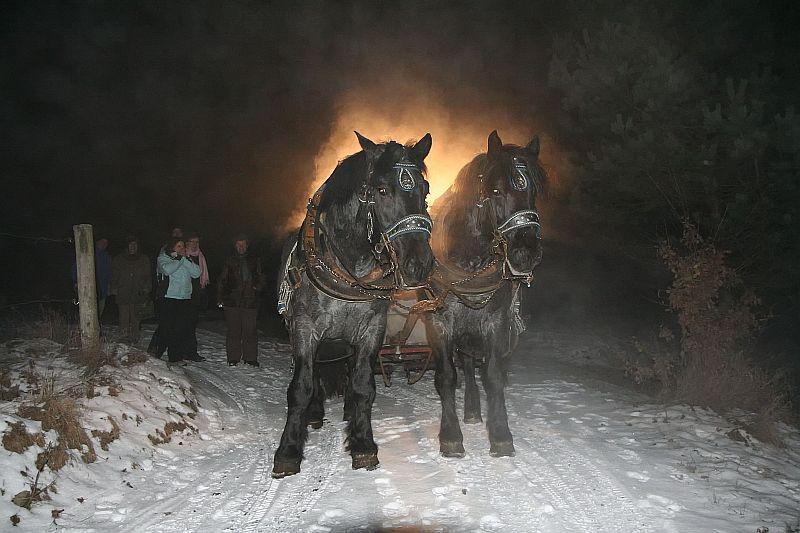 Pferdeschlittenfahrt_bei_Nacht